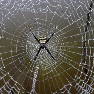 دانلود رایگان پاورپوینت با موضوع تار عنکبوت - دانلود پاورپوینت با موضوع ویژگی تار عنکبوت - دانلود رایگان پاورپوینت در مورد تار عنکبوت - دانلود رایگان پاورپوینت در مورد عنکبوت - دانلود رایگان پاورپوینت عنکبوت