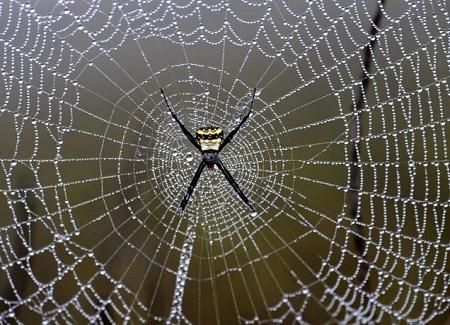 دانلود رایگان پاورپوینت با موضوع تار عنکبوت – دانلود پاورپوینت با موضوع ویژگی تار عنکبوت – دانلود رایگان پاورپوینت در مورد تار عنکبوت – دانلود رایگان پاورپوینت در مورد عنکبوت – دانلود رایگان پاورپوینت عنکبوت