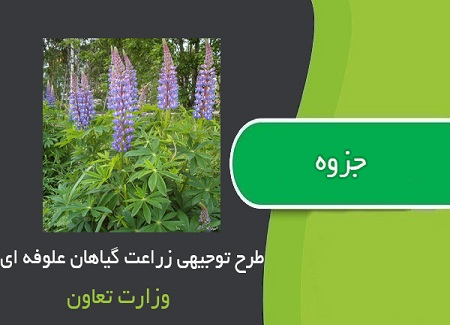 دانلود pdf گیاهان علوفه ای از کاشت تا برداشت - طرح توجیهی زراعت گیاهان علوفه ای - کتاب طرح توجیهی کشت یونجه و گیاهان علوفه ای - دانلود pdf طرح توجیهی زراعت گیاهان علوفه ای - دانلود pdf زراعت گیاهان علوفه ای